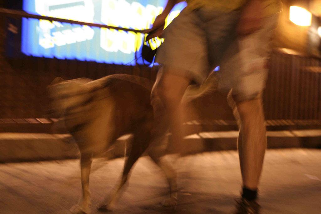 Veljar med hund i Flåm. Foto: Elvert Xavier Barnes